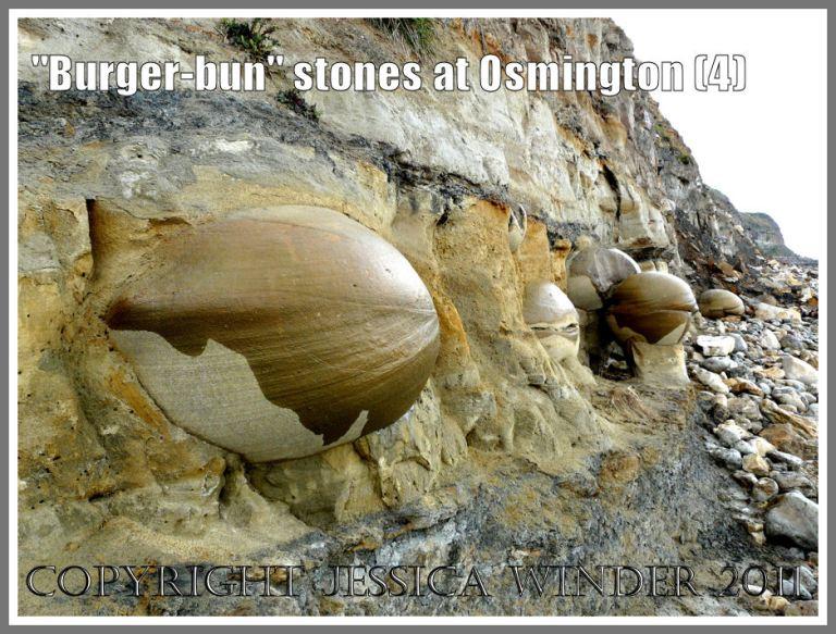 Boulders in the cliff at Osmington: Bencliff Grit nodules embedded in Upper Jurassic Corallian Formation Beds in the base of the cliff at Osmington Bay, Dorset, UK on the Jurassic Coast (4)