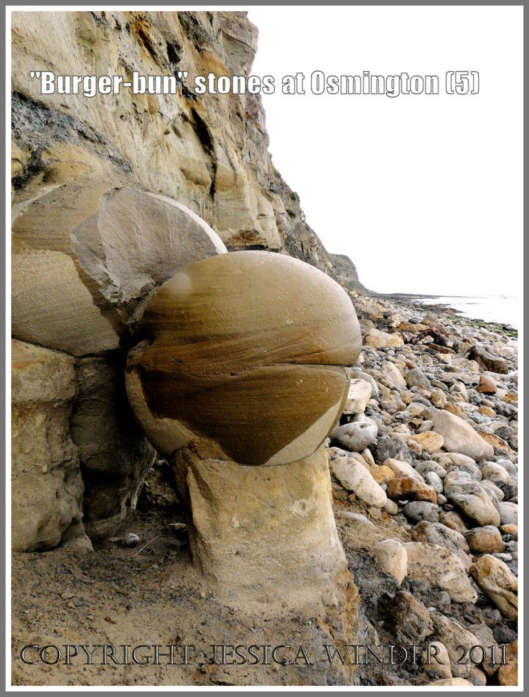 This will be the next Bencliff Grit nodule to fall from the cliff at Osmington Bay, Dorset, UK - sitting on a pillar of matrix that holds it in position (5)