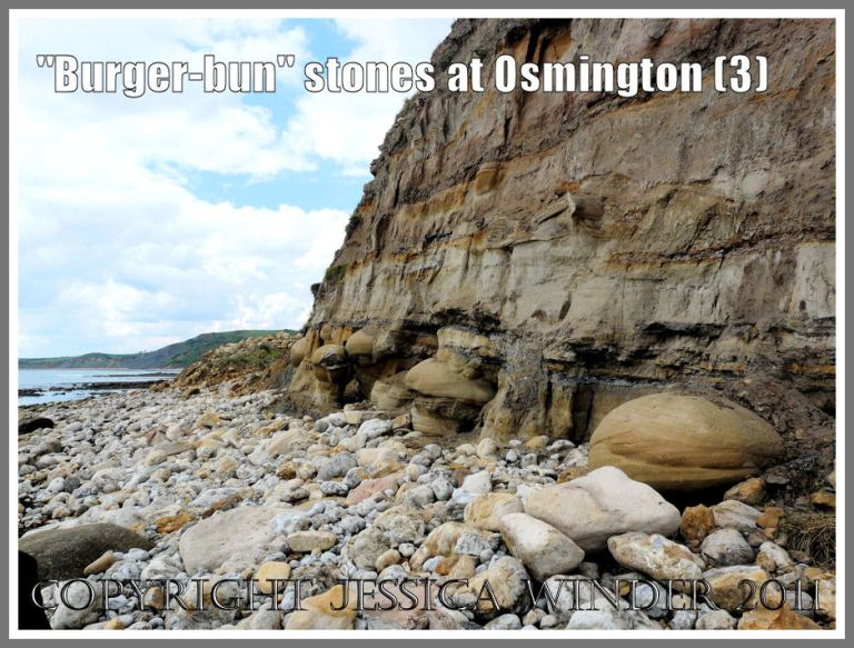 View looking west showing Bencliff Grit nodules in the base of the cliff at Osmington Bay, Dorset, UK, part of the Jurassic Coast (3)