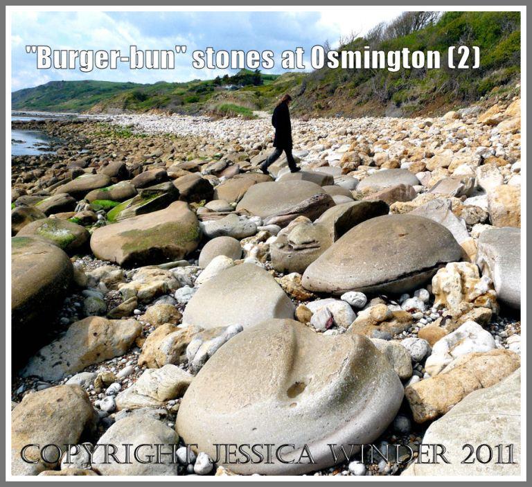 Rounded boulders like giant pebbles at Osmington beach: Jumping from boulder to boulder on Jurassic Bencliff Grit nodules at Osmington Bay, Dorset, UK (2)