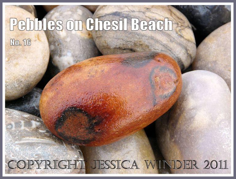 Pebble with rusty orange colouration on Chesil Beach at Chesil Cove, Isle of Portland, Dorset, UK, on the Jurassic Coast (2)