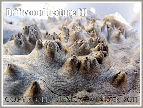 Driftwood macro-photograph showing weathered surface texture with burrs (1)