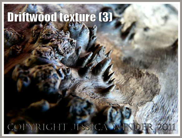 Driftwood macro-photograph showing weathered surface texture and burrs (3)