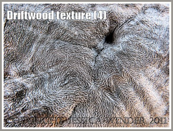 Driftwood macro-photograph showing weathered surface texture and woodgrain patterns (4)