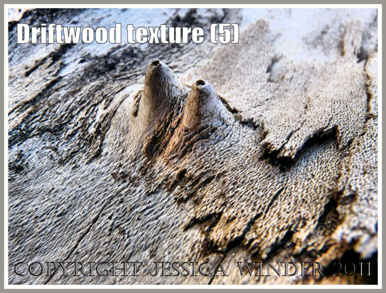 Driftwood macro-photograph showing weathered surface texture, flaking bark, burrs, and woodgrain patterns (5)