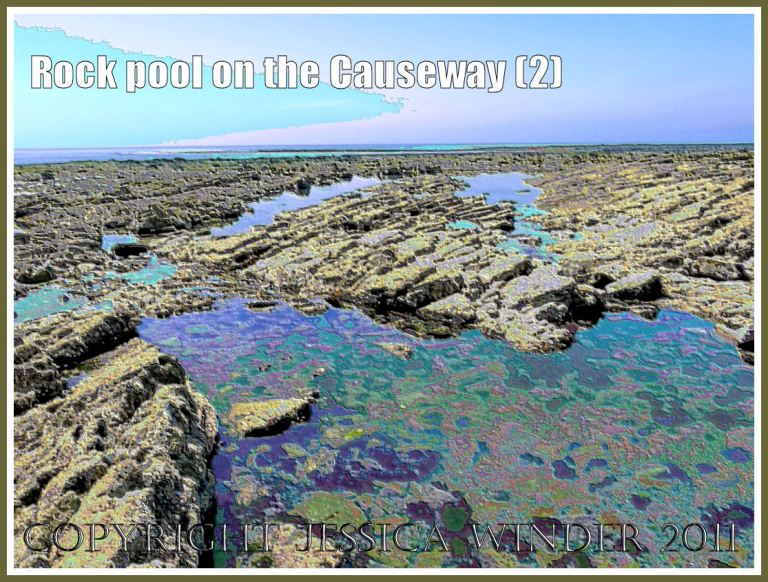 Rock pools with reflections and seaweeds on Worms Head Causeway, Gower, South Wales, UK, a wave-cut platform of Carboniferous Limestone - a digitally modified photograph (2)