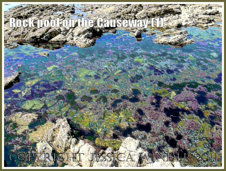 Rock pool on Worms Head Causeway, Gower, South Wales, UK - a digitally modified photograph (1)