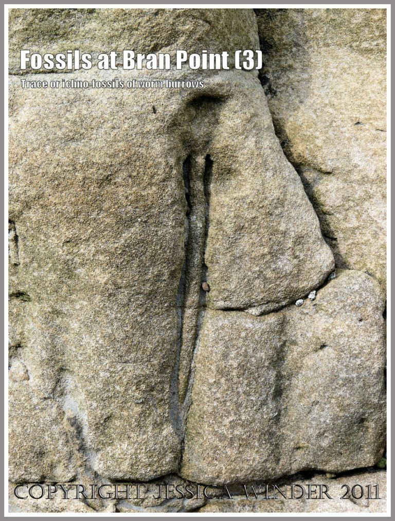 Fossil worm burrows: Trace fossils, also called ichnofossils, of tunnels and burrows made by marine worms millions of years ago, in the Arenicolites Beds in rocks at Bran Point, Ringstead Bay, Dorset, UK, on the Jurassic Coast (3)