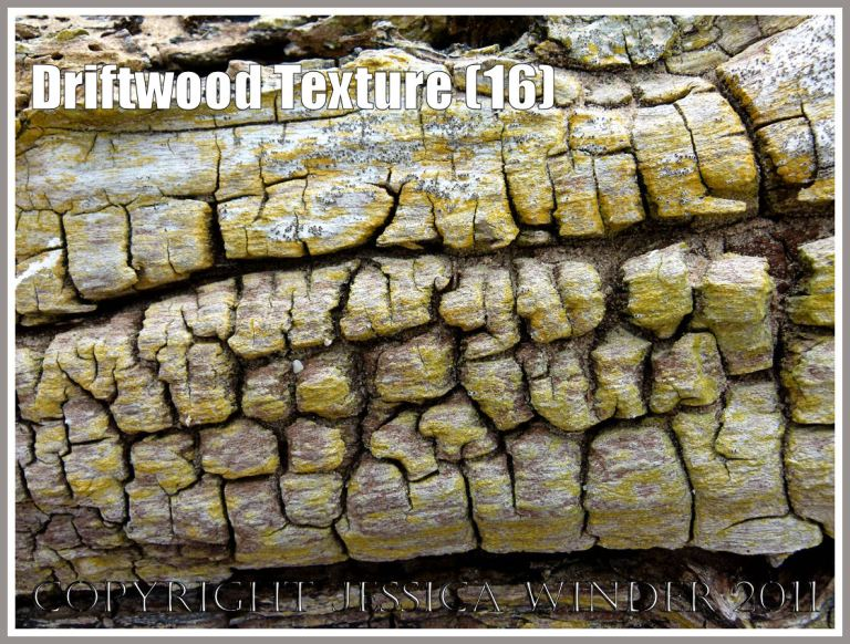 Yellow lichen on stranded driftwood: Wood texture and natural pattern in driftwood on the strandline at Whiteford Sands, Gower, South Wales, UK (16)