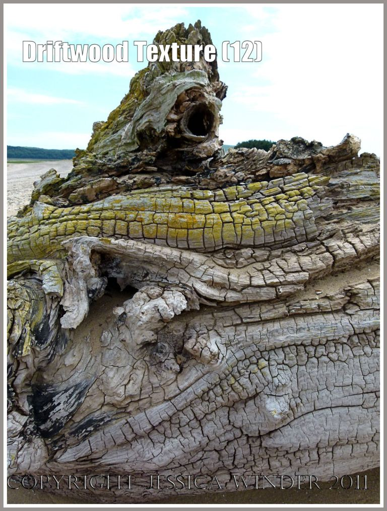 Wood texture and natural pattern in driftwood on the strandline at Whiteford Sands, Gower, South Wales, UK (12)