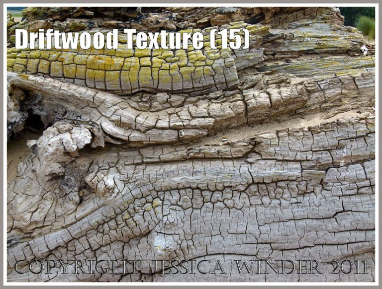 Driftwood close-up: Wood texture and natural pattern in driftwood on the strandline at Whiteford Sands, Gower, South Wales, UK (15)