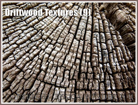 Growth rings in driftwood: Wood texture and natural abstract patterns in a piece of driftwood on the strandline at Whiteford Sands, Gower, South Wales, UK (9)
