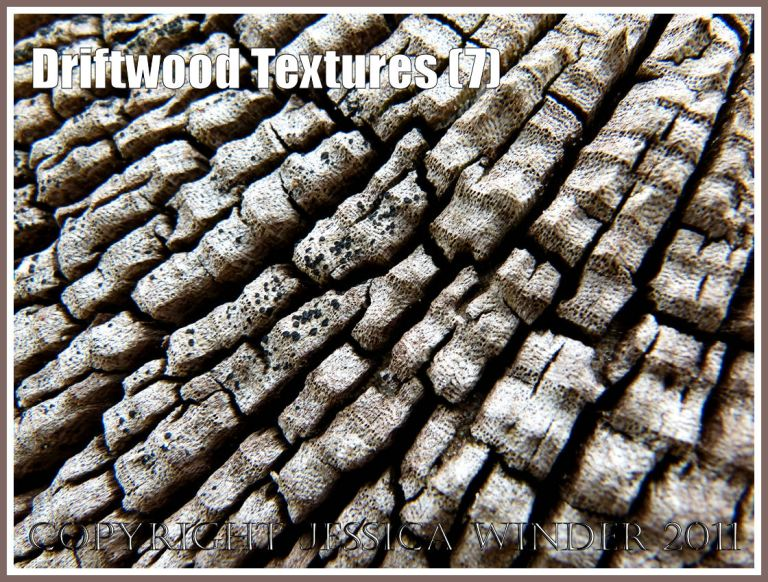 Driftwood texture and pattern: Wood texture and natural abstract patterns in a piece of driftwood on the strandline at Whiteford Sands, Gower, South Wales, UK (7)