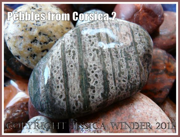 Pebbles from Corsica: A grey-green pebble with stripes and dots from Corsica (2)