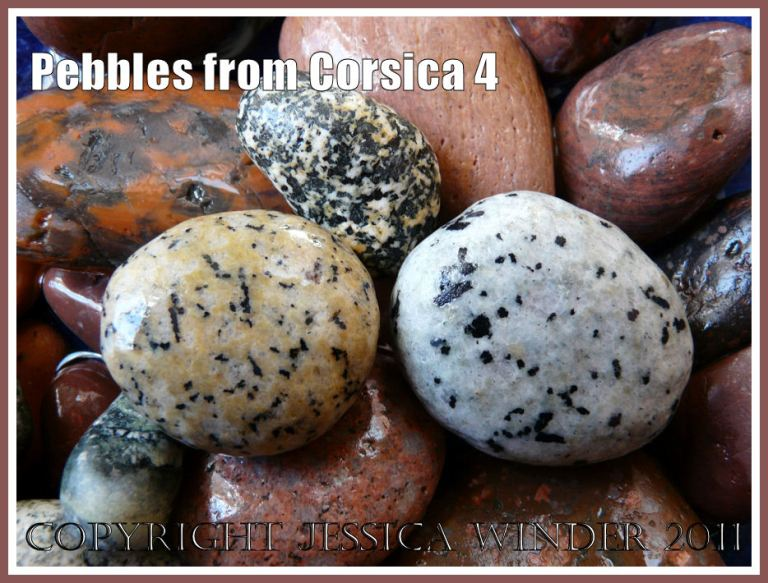 Corsican pebbles: Spotted pebbles from Corsica (4)