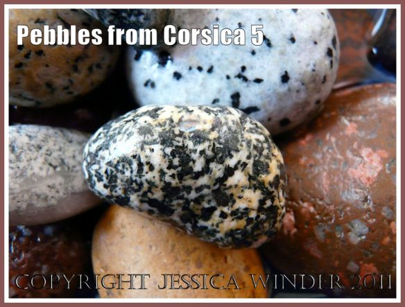 Pebbles from Corsica: Black and white spotted pebble from Corsica (5)