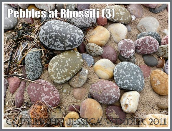 Pebbles at Rhossili Bay: Rain-spotted multi-coloured pebbles at Rhossili, Gower, West Glamorgan, South Wales, UK (1)