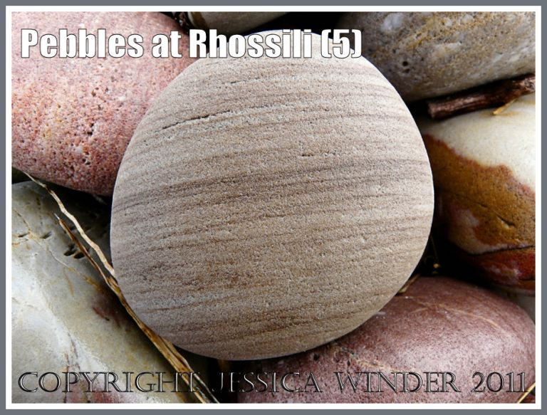 Sandstone pebble: A rounded grainy textured pebble with regular fine brown stripes at Rhossili, Gower, West Glamorgan, South Wales, UK (3)