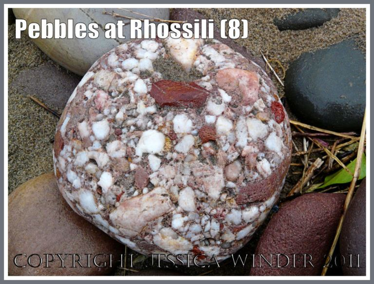 A conglomerate pebble with circular outline and incorporating small red, pink, and white chunks of various rocks, at Rhossili, Gower, West Glamorgan, UK (6)