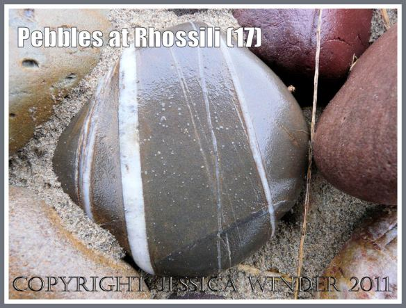 Striped pebble: Wet grey limestone pebble with white stripes on Rhossili Beach, Gower, West Glamorgan, South Wales, UK (17)