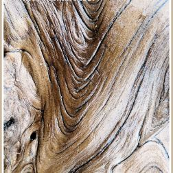 Sea-soaked driftwood: Smooth, wet, satin texture and woodgrain pattern on a piece of driftwood found on the strandline at Rhossili Bay, Gower, South Wales, UK (22)