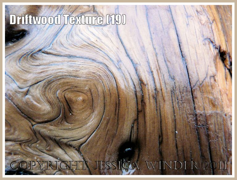 Patterns in nature: Smooth, wet, satin texture and woodgrain pattern on a piece of driftwood found on the strandline at Rhossili Bay, Gower, South Wales, UK (19)