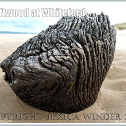Driftwood on the beach at Whiteford Sands, Gower, South Wales, UK (6)