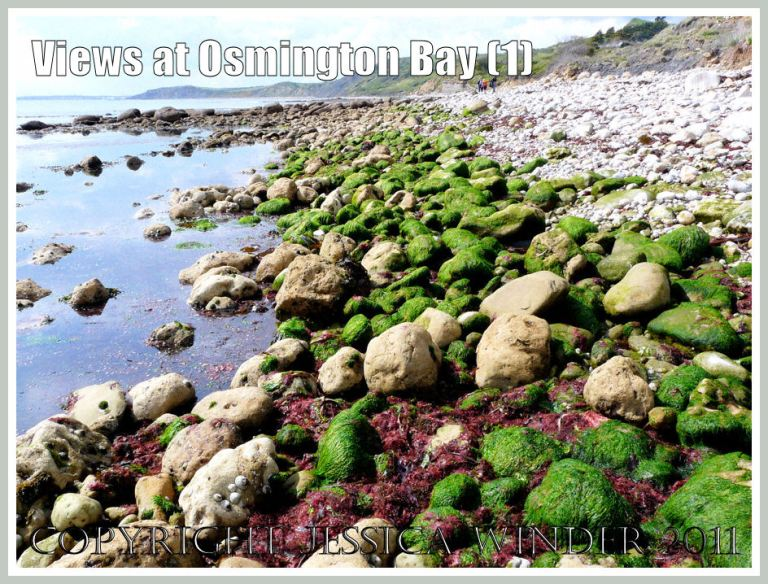 View with red and green seaweeds at Osmington Bay, Dorset, UK, looking west - part of the Jurassic Coast