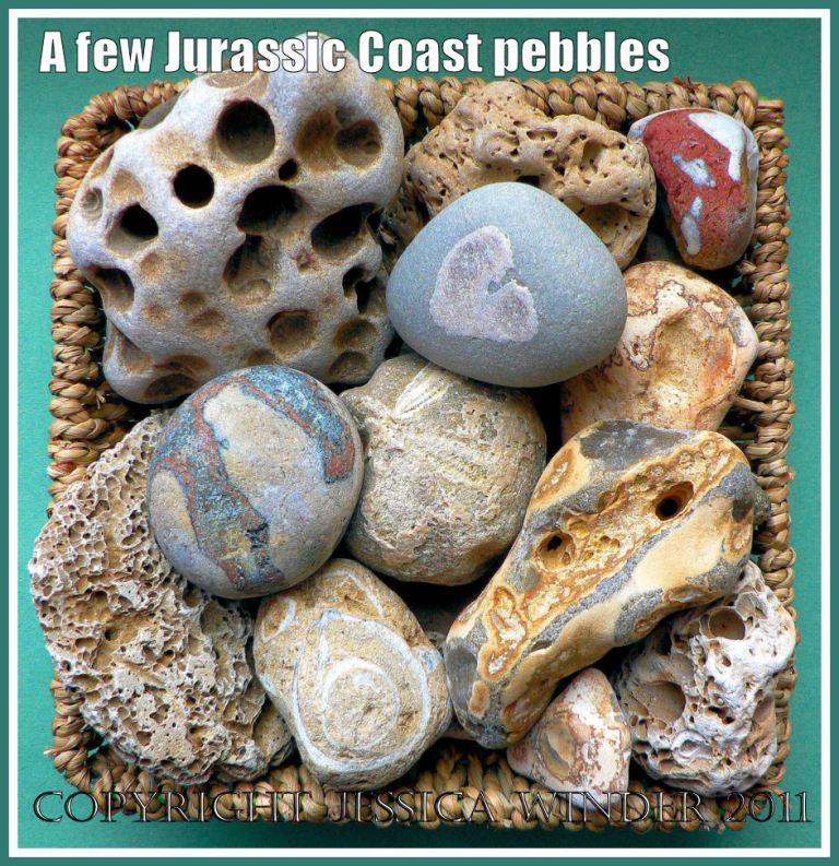 Pebbles from the Jurassic Coast World Heritage Site in Dorset, U.K.