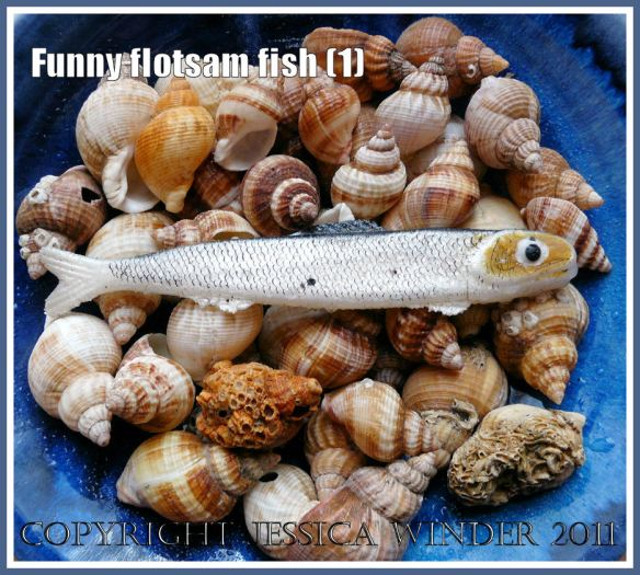 Funny flotsam fishing lure in a bowl of whelk shells on my window sill (1)