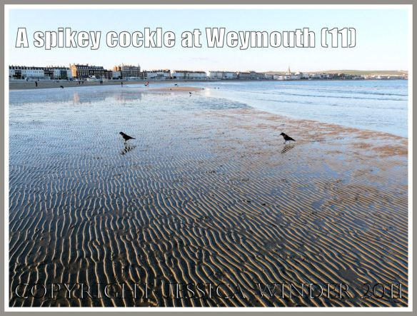 View of Weymouth Beach at low tide showing wet sand ripples where the spikey-shelled cockle was found alive, Dorset, UK, part of the Jurassic Coast (11)