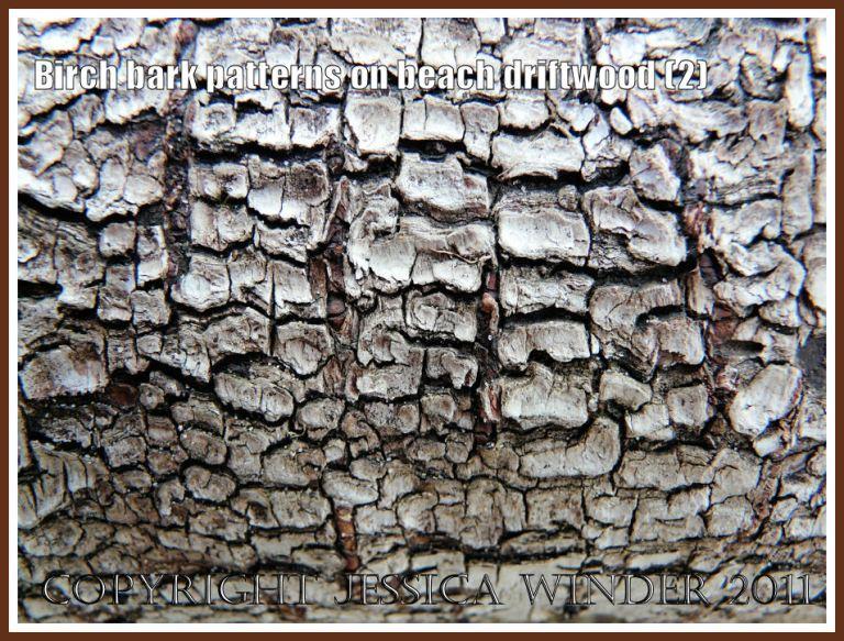 Coarse, dark, reticulated Birch bark pattern on driftwood from the strandline at Whiteford Sands, Gower, West Glamorgan, UK, (2)