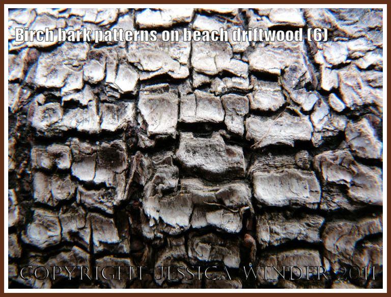 Rough reticulated pattern in Birch bark on driftwood found atWhiteford beach, Gower, West Glamorgan, UK (6)