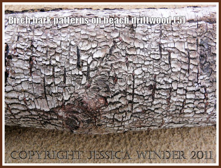 Natural rough dark reticulated bark pattern of Birch driftwood against wet sand at Whiteford , Gower, West Glamorgan, UK (5)