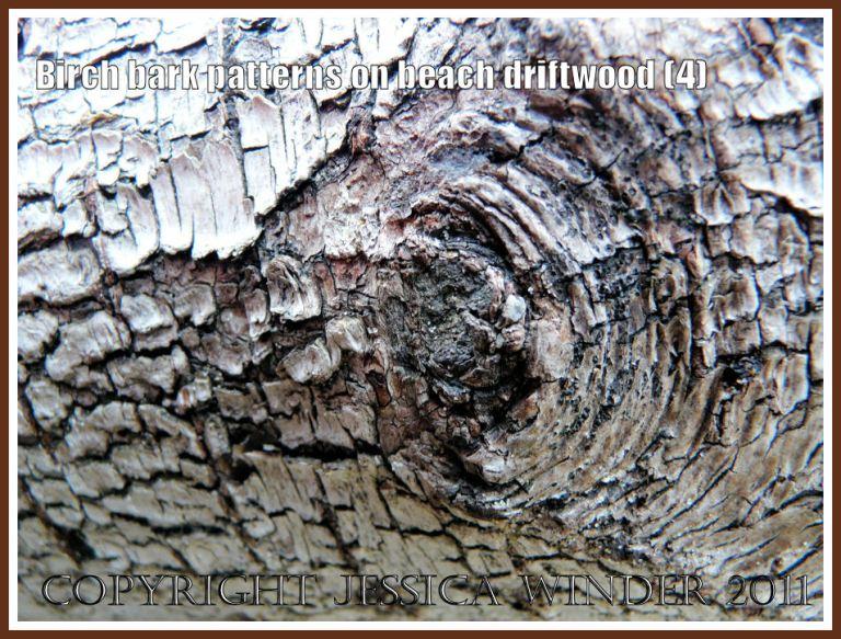 Natural rough dark pattern around a knot in Birch tree bark on driftwood at Whiteford Sands, Gower, West Glamorgan, UK (4)