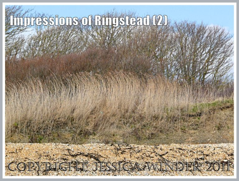 Seaside vegatation at Ringstead Bay: Reed stalks and bare branches shaped by the wind atop the low cliff at Ringstead Bay, Dorset, UK - part of the Jurassic Coast - 2 March 2010 (2)
