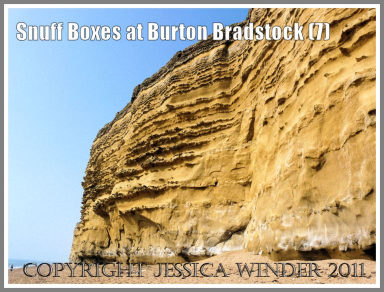 The cliff of Bridport Sands with Inferior Oolite topping at Burton Bradstock, Dorset, UK - part of the Jurassic Coast (7)