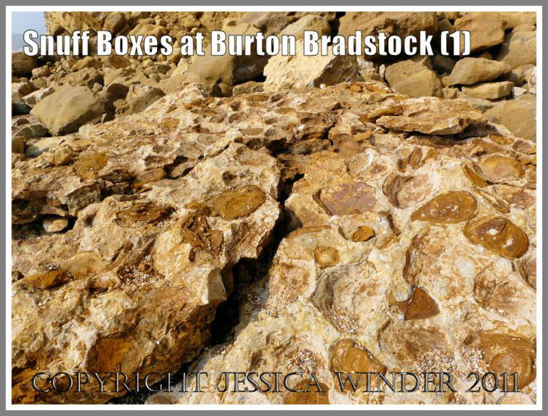 "Geology at Burton Bradstock: ""Snuff-boxes"" in a boulder of Inferior Oolite on the beach from a rock fall of the cliff at Burton Bradstock, Dorset, UK - part of the Jurassic Coast (1)"