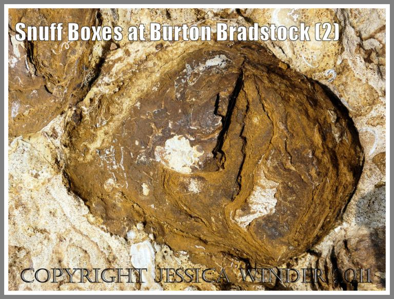 "Burton Bradstock rocks: ""Snuff-box"" from the Red Bed of the Inferior Oolite at Burton Bradstock, Dorset, UK - part of the Jurassic Coast (2)"