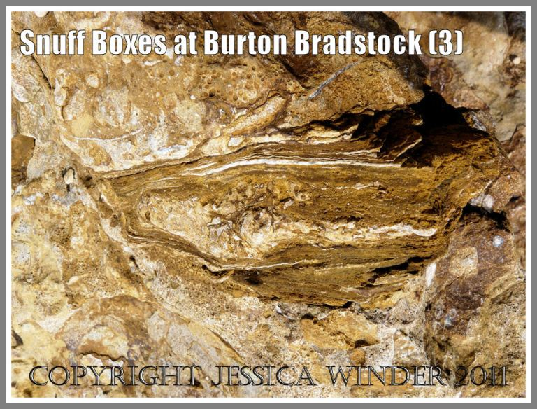 "Burton Bradstock boulders: Naturally-occurring vertical section through a ""snuff-box"" from the Red Bed in the Inferior Oolite at Burton Bradstock, Dorset, UK - part of the Jurassic Coast (3)"