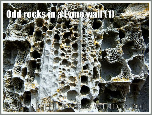 Rock texture: Close up detail of natural pattern in rock with holes in a sea wall at Lyme Regis, Dorset, UK, on the Jurassic Coast (1)