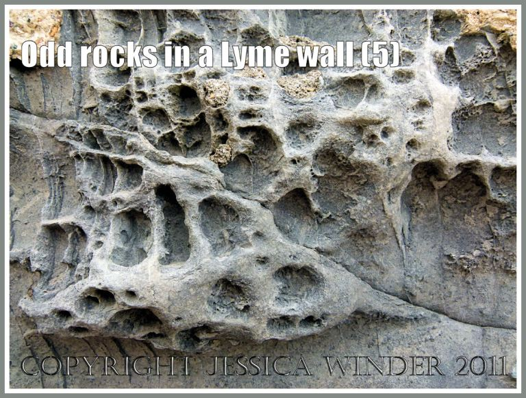 Rock texture: Detail of natural pattern and texture in rock with holes in a sea wall at Lyme Regis, Dorset, UK, on the Jurassic Coast (5)