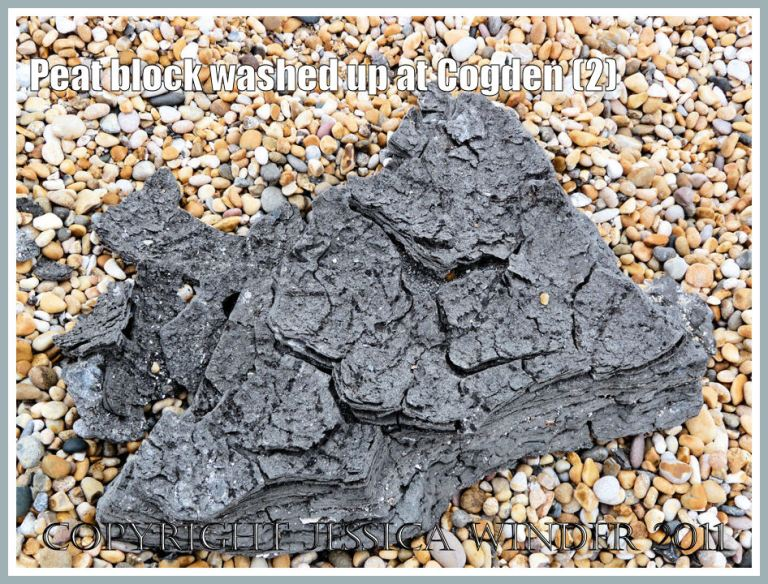 Ancient peat block thrown up by storms onto the shingle bank at Cogden Beach, Dorset, UK - part of the Jurassic Coast - from a peat bed underlying the mobile sediments of the seashore (2)