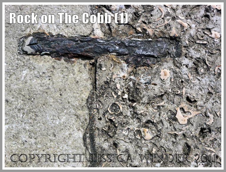 Portland Roach on the Cobb: Detail of the Portland Roach limestone blocks from The Cobb, Lyme Regis, Dorset, UK on the Jurassic Coast (1)