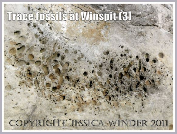 Trace fossils in a limestone boulder at Winspit, Dorset, UK - part of the Jurassic Coast (3)