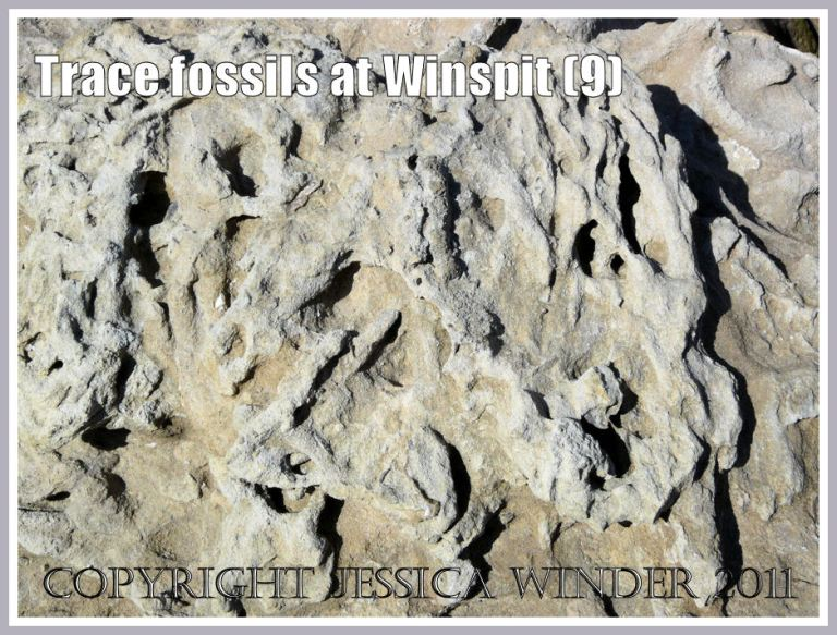 Detail of trace fossils on limestone boulder (photo 8) at Winspit, Dorset, UK - part of Jurassic Coast (9)