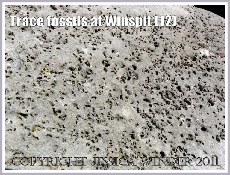 Detail of trace fossils in a limestone boulder (photo 11) at Winspit, Dorset, UK - part of the Jurassic Coast (12)