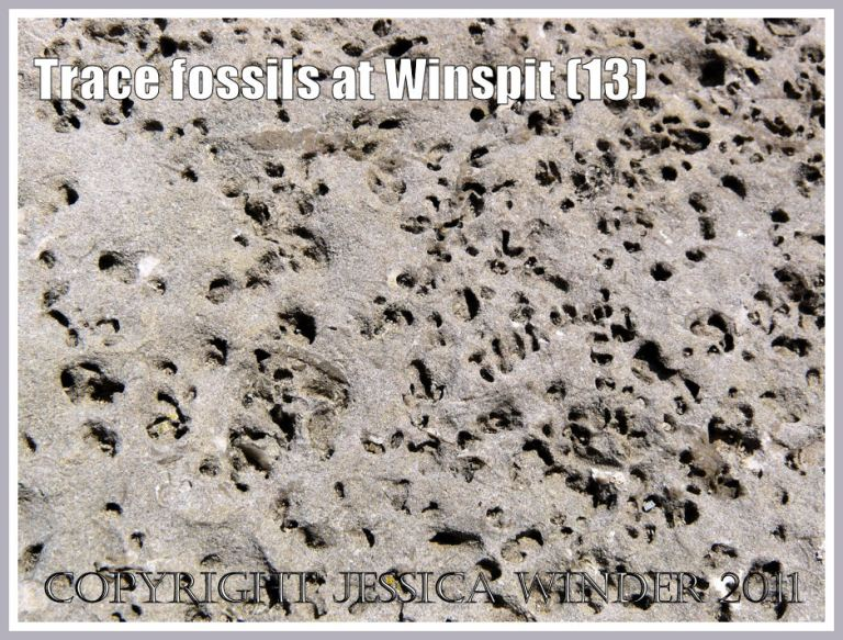Detail of trace fossils in a limestone boulder (photo 11) at Winspit, Dorset, UK - part of the Jurassic Coast (13)