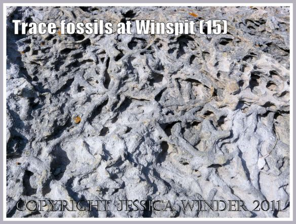 Detail of trace fossils on a limestone boulder (photo 14) at Winspit, Dorset, UK - part of the Jurassic Coast (15)