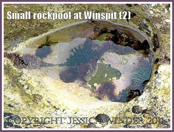 Almond or eye-shaped small rockpool at Winspit, Dorset, UK - part of the Jurassic Coast (2)